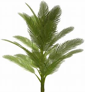 Icon Palm Tree PNG Image Picpng