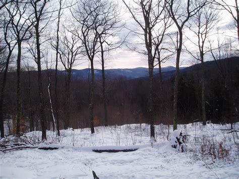 750x1334 beautiful snow green nature beautiful nature monitor landscape foret