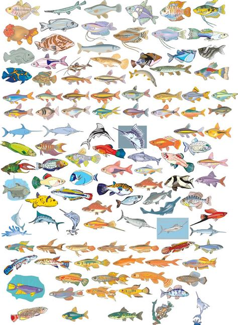 pictures  names   type  fishes  fish tank