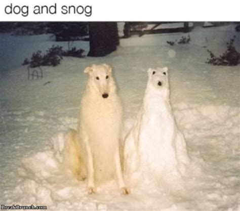 funny dank memes  dog breakbrunch