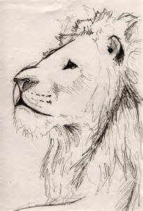 Lion Sketches Drawings