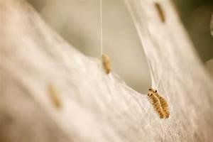 Silk Pavillion - CNC Deposited Silk & Silkworm ...  Silk