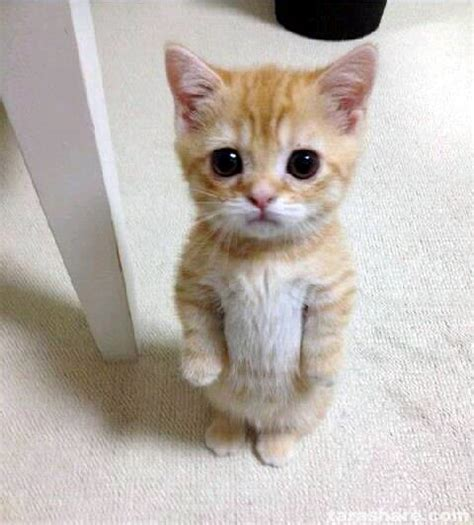 Meme Creator  Cute Sad Cat Meme Meme Generator At