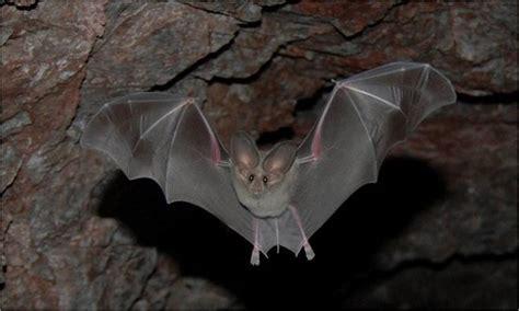 where bats live bats u s national park service