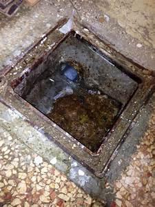 rats dans evacuation wc With odeur d egout dans maison