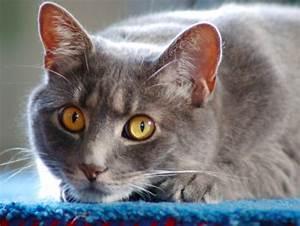 Odeur Urine Chat : 4 astuces pour se d barrasser de l 39 odeur d 39 urine de chat astuces de grand m re ~ Maxctalentgroup.com Avis de Voitures