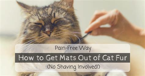 how to get mats out of cat hair free way how to get mats out of cat fur no