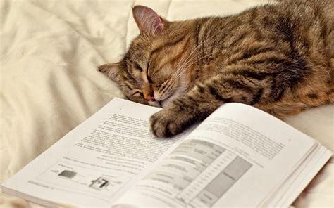 Cat sleeping on the book wallpaper | animals | Wallpaper ...