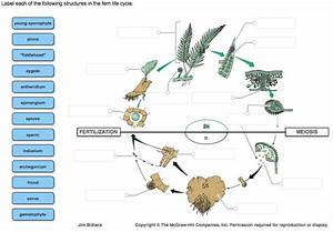 Solved  Label Each Of The Following Structures In The Fern