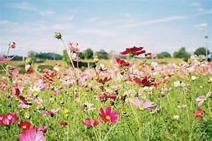 Le plus beau paysage fleuri voyez les meilleures images for Les couleurs chaudes et froides 5 le plus beau paysage fleuri voyez les meilleures images