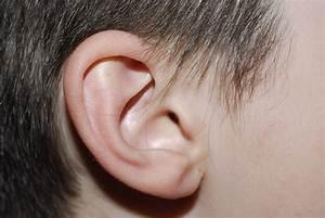 Free Child U0026 39 S Ear Stock Photo