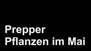 Pflanzen Im Mai : prepper pflanzen im mai youtube ~ Buech-reservation.com Haus und Dekorationen