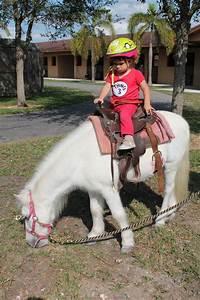 Pony Rides Miami - Party Pony Rides | Miami Equestrian Club