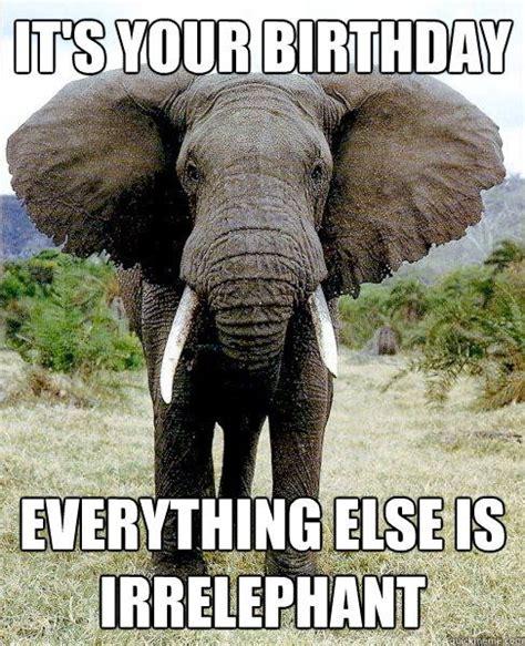 Elephant Memes - best 25 birthday memes ideas on pinterest meme birthday card humor birthday and happy bday meme