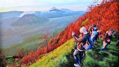 gunung bromo wisata bromo malang  malangcom