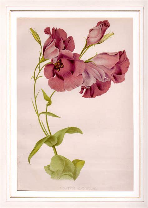 fiori botanica 27158 lisianthus galleria garisenda