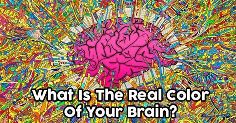 what color is a brain what is the real color of your brain quizdoo