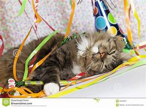 Cat Waking Up After Party Stock Image  Image Of Festive