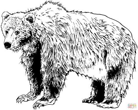 disegno  orso bruno realistico da colorare disegni da