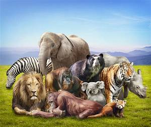 The gallery for --> Group Of Different Animals Together
