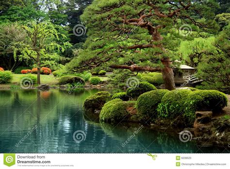 calm zen lake  bonzai trees stock image image