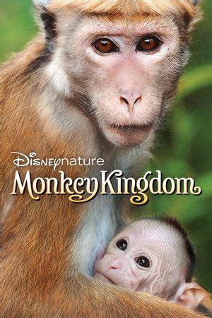ideas  monkey kingdom  pinterest funny
