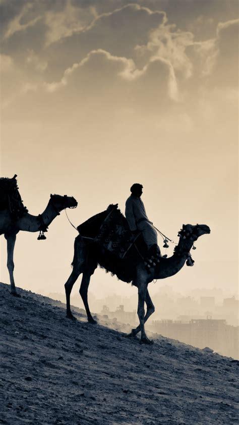wallpaper camel desert sunset animals