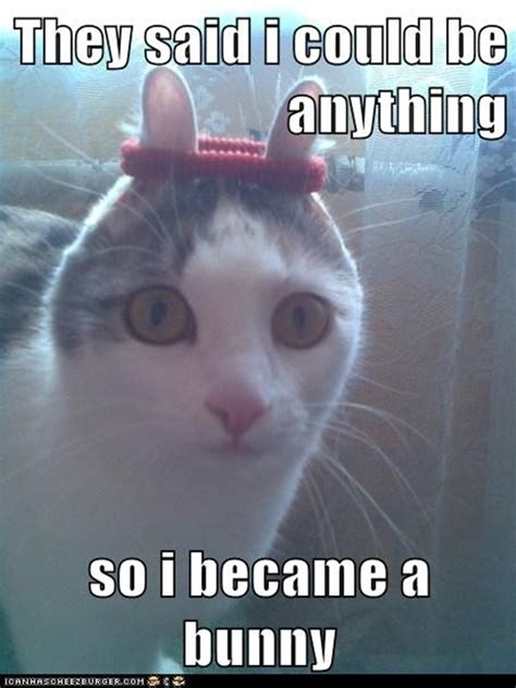 Animal Memes Funny - they told me i could be anything 20 pics amazing creatures