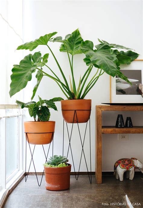 pflanzen für wohnung pin herrmann auf wohnideen zimmerpflanzen