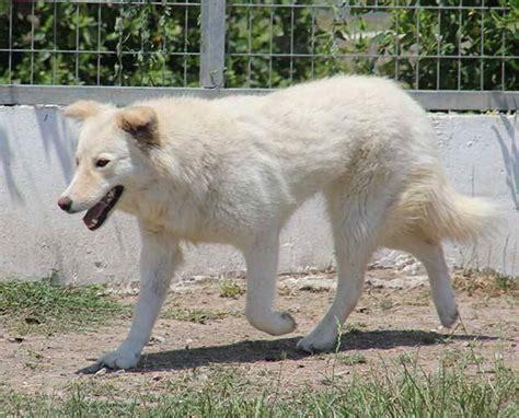 Couch Gesucht  Hundevermittlung  Datenbank Für Hunde
