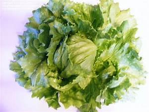 PlantFiles Pictures: Lettuce, Crisphead Lettuce ...
