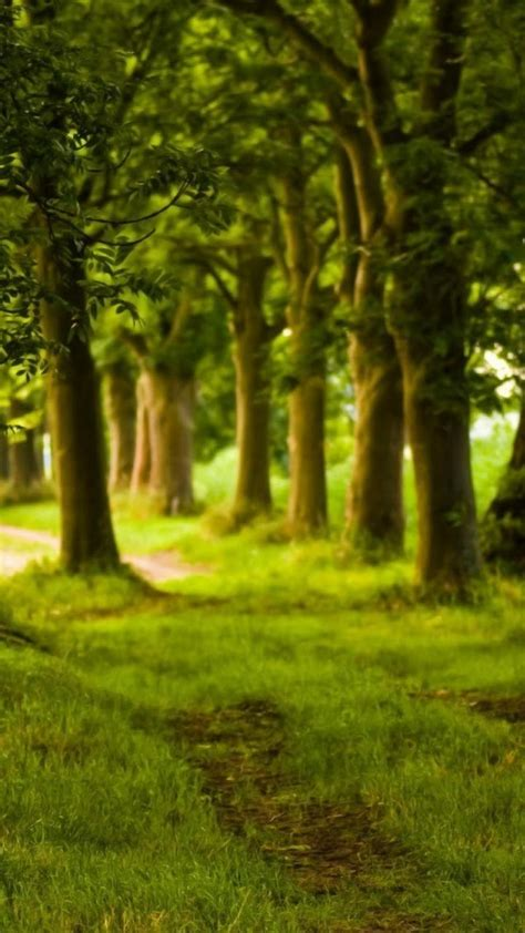 green nature trees forest grass path background wallpaper