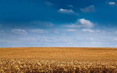 Barley Field Sky Wallpapers Nature