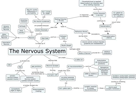 Nervous System. House Cleaning Chandler First Data E Commerce. Work Order System Software Childeren In Need. Michigan Head And Spine Institute. Lemon Road Elementary School. Patient Centered Medical Home Affordable Care Act. Best Web Hosts For Small Business. Online Culinary Degrees Brandon Divorce Lawyer. What Credit Card Can I Get Eco Home Cleaning