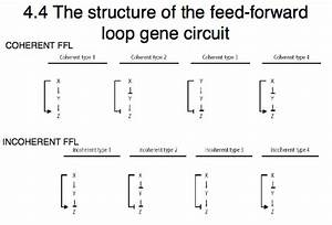 What Is The Difference Between I1  I2  I3  And I4 Feed-forward Loops