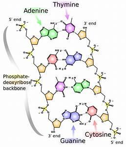 2 3 Biological Molecules  U2013 Concepts Of Biology  U2013 1st