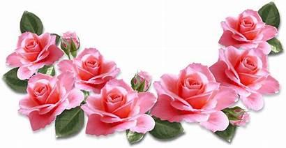 Pink Roses Rose Clipart Clip Flower Decoration