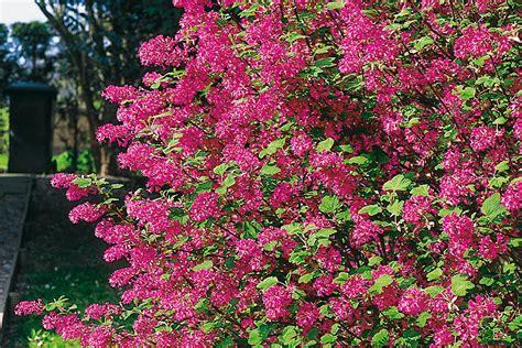 Pflanzen Für Hecken  Hecken  Ratgeber  Garten Schlüter