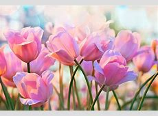 Royalty Free Flowers Pictures, Images and Stock Photos