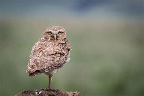 The Audubon Birds & Climate Change Report