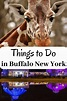 Things to Do in Buffalo New York - Eat Sleep Travel Repeat