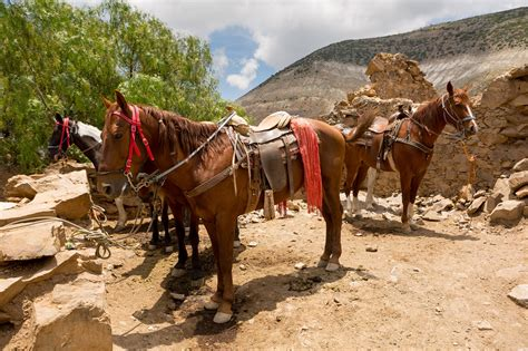 mexico horse horses latin lovers places america copper canyon incredible riding lata train madre sierra