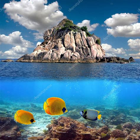 tropical paradise  corals   reef top stock photo