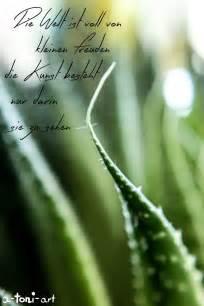 sprüche garten 1000 ideas about flora garten on garten gewächshaus kletternde blühende weinranken