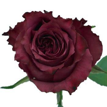 blueberry fresh cut rose