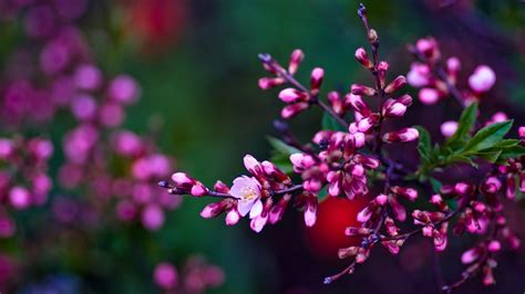 Spring Flowers Backgrounds Hd (30+)