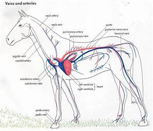 Animal Respiratory System
