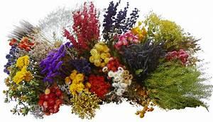 Composition Fleurs Séchées : fleurs sechees ~ Teatrodelosmanantiales.com Idées de Décoration