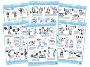 Back Muscles Exercise Weight Training Chart  U2013 Chartex Ltd