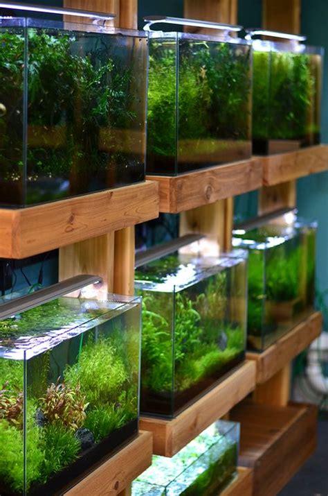 aquascaping supplies aquarium zen seattle fish store aquariums aquascape